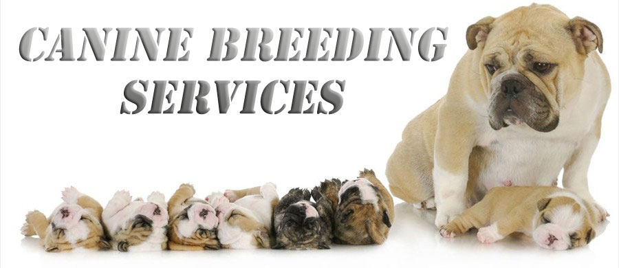 Canine Breeding Services